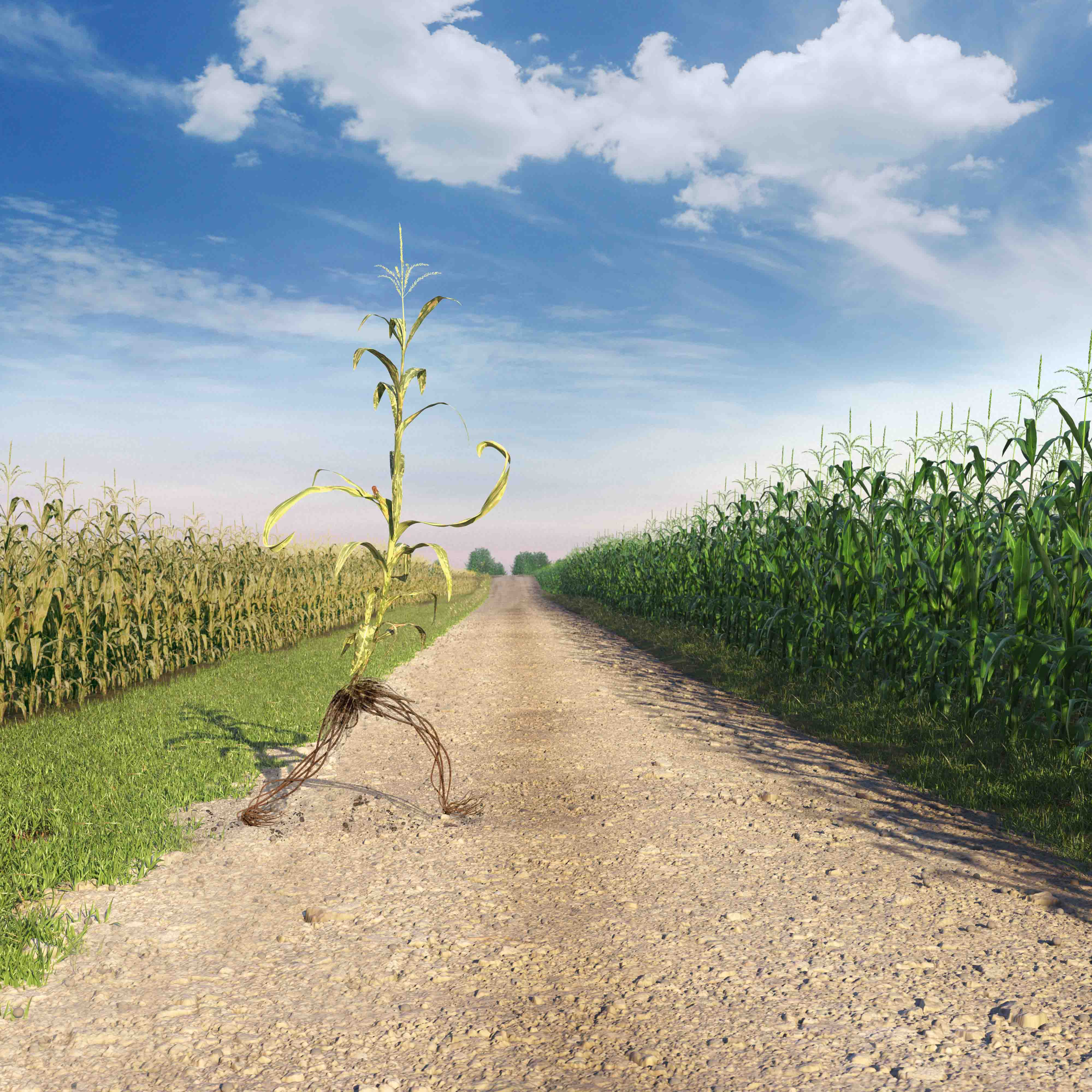 A corn plant walking from a diseased field to a healthy field magazine ad