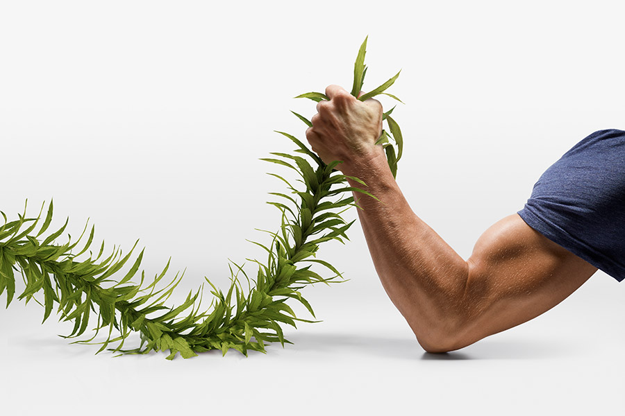 Buff man's arm wrestling a weed on white background